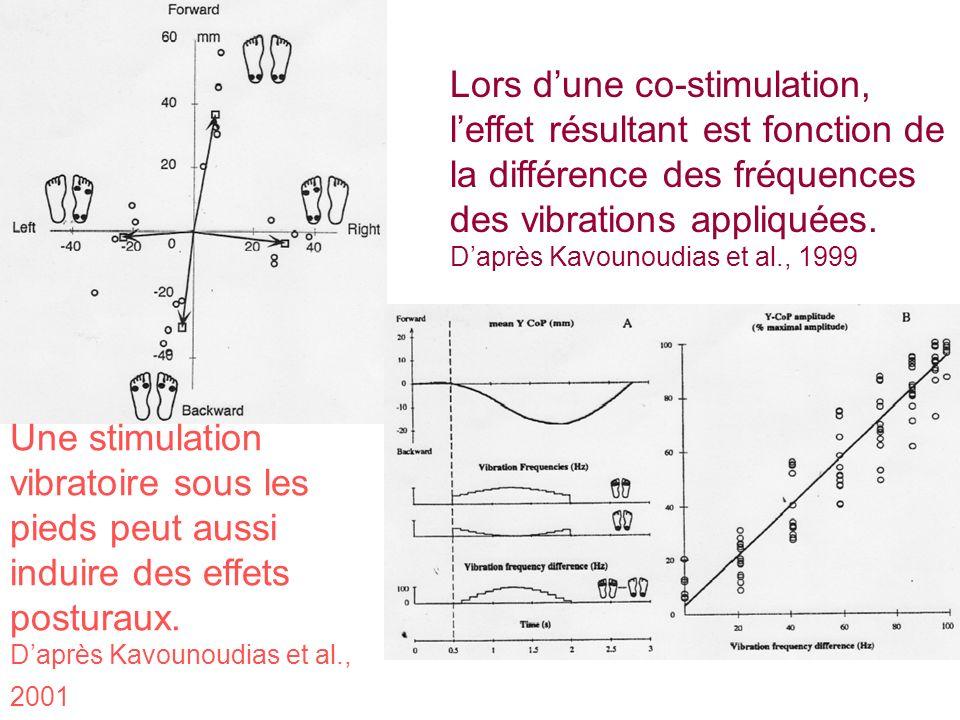 Une stimulation vibratoire sous les pieds peut aussi induire des effets posturaux. Daprès Kavounoudias et al., 2001 Lors dune co-stimulation, leffet r