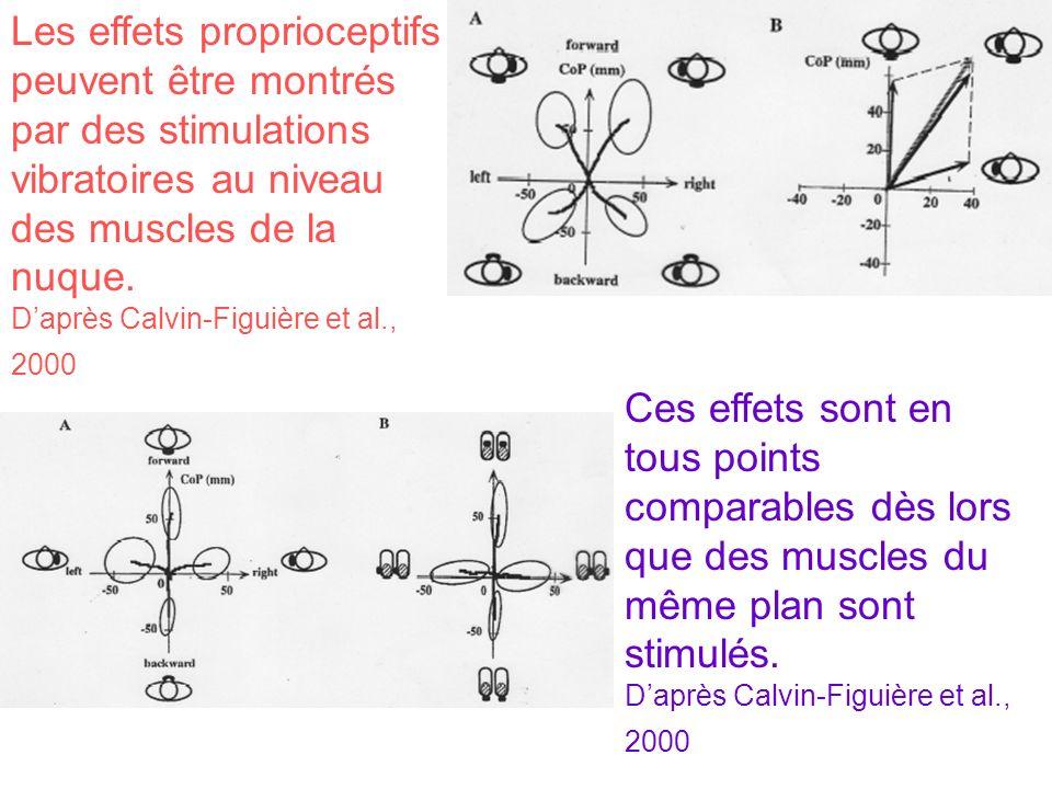 Les effets proprioceptifs peuvent être montrés par des stimulations vibratoires au niveau des muscles de la nuque. Daprès Calvin-Figuière et al., 2000