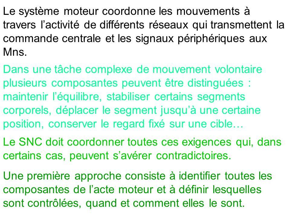 Le système moteur coordonne les mouvements à travers lactivité de différents réseaux qui transmettent la commande centrale et les signaux périphérique