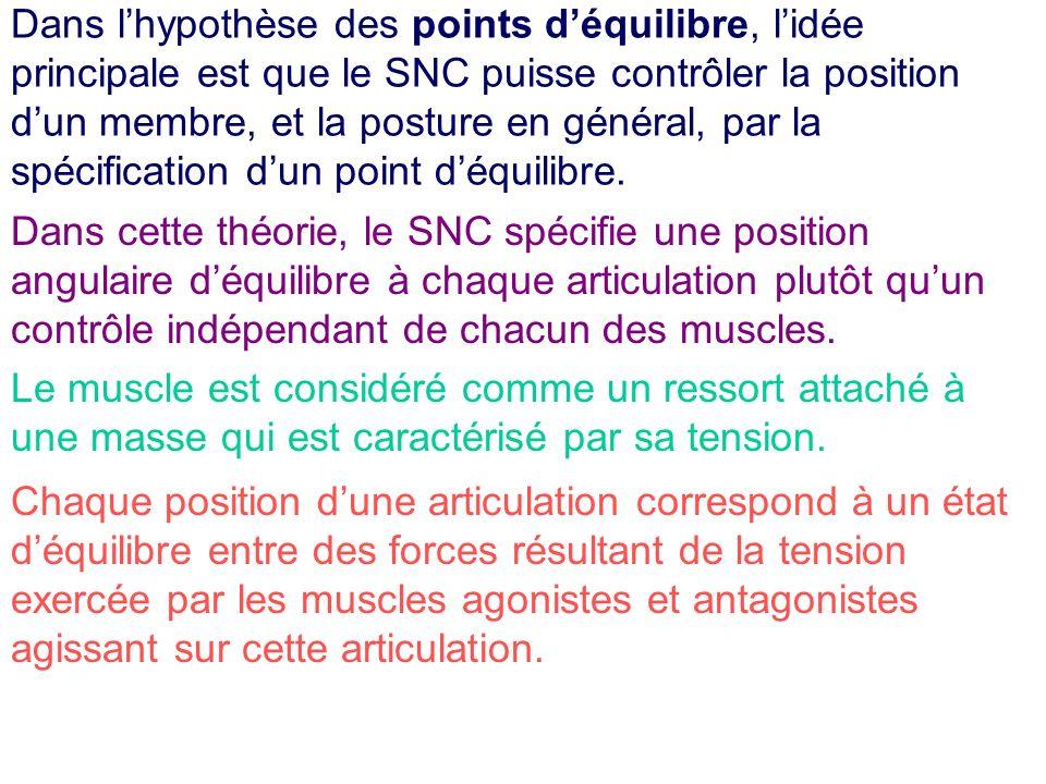 Dans lhypothèse des points déquilibre, lidée principale est que le SNC puisse contrôler la position dun membre, et la posture en général, par la spéci