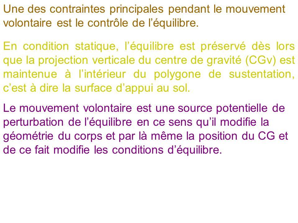 Une des contraintes principales pendant le mouvement volontaire est le contrôle de léquilibre. En condition statique, léquilibre est préservé dès lors