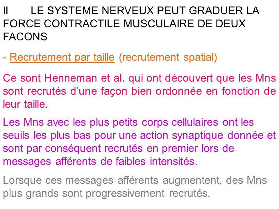 IILE SYSTEME NERVEUX PEUT GRADUER LA FORCE CONTRACTILE MUSCULAIRE DE DEUX FACONS - Recrutement par taille (recrutement spatial) Ce sont Henneman et al