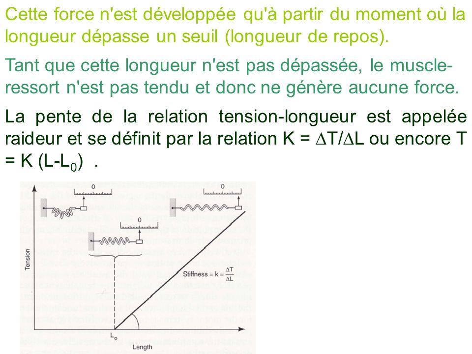 Cette force n'est développée qu'à partir du moment où la longueur dépasse un seuil (longueur de repos). Tant que cette longueur n'est pas dépassée, le