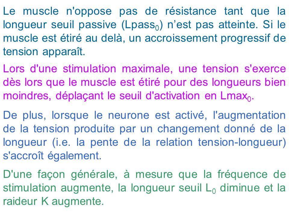 Le muscle n'oppose pas de résistance tant que la longueur seuil passive (Lpass 0 ) nest pas atteinte. Si le muscle est étiré au delà, un accroissement