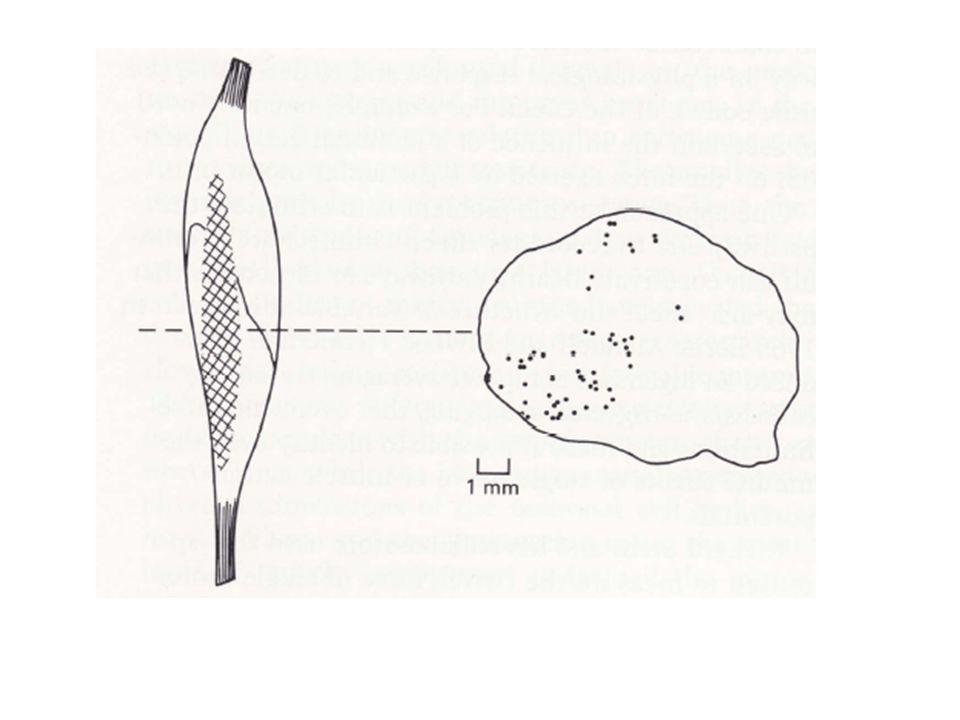 VILES RECEPTEURS MUSCULAIRES A LETIREMENT INFORMENT QUANT A LA LONGUEUR DU MUSCLE, A SA TENSION ET A SA VITESSE DALLONGEMENT Si lon enregistre les signaux afférents provenant des divers récepteurs et que lon étire le muscle homonyme, on voit de leur part une augmentation de leur fréquence de décharge.