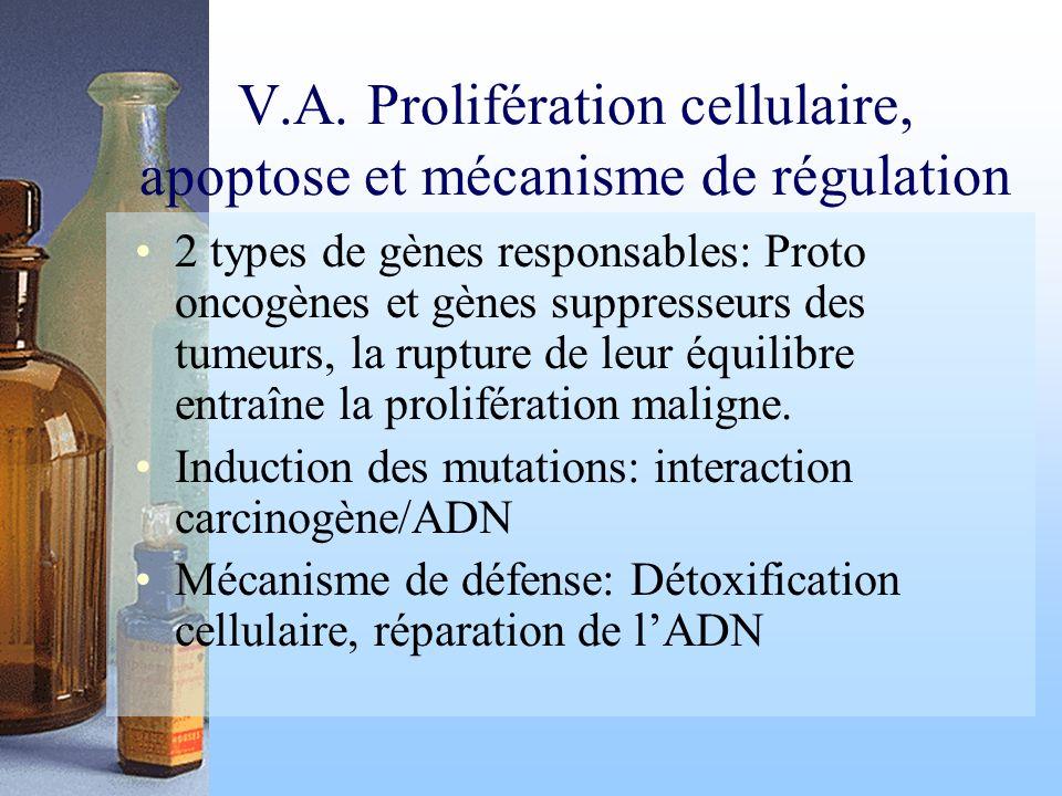 V.A. Prolifération cellulaire, apoptose et mécanisme de régulation 2 types de gènes responsables: Proto oncogènes et gènes suppresseurs des tumeurs, l