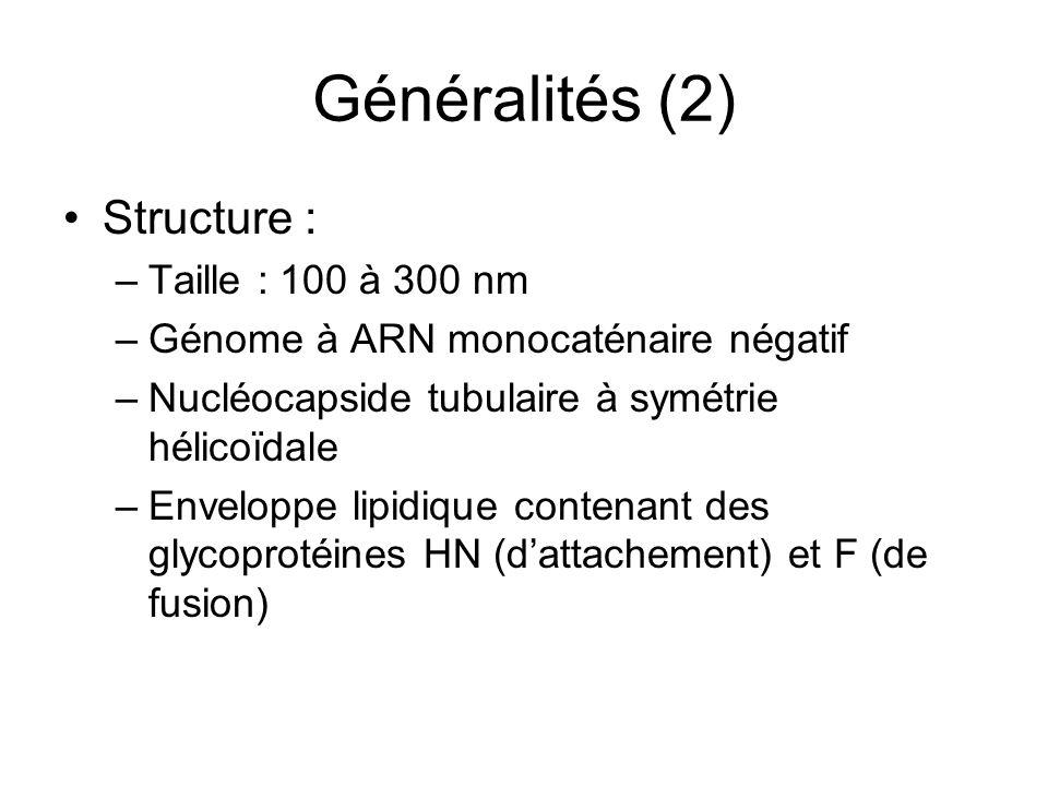 Généralités (2) Structure : –Taille : 100 à 300 nm –Génome à ARN monocaténaire négatif –Nucléocapside tubulaire à symétrie hélicoïdale –Enveloppe lipi