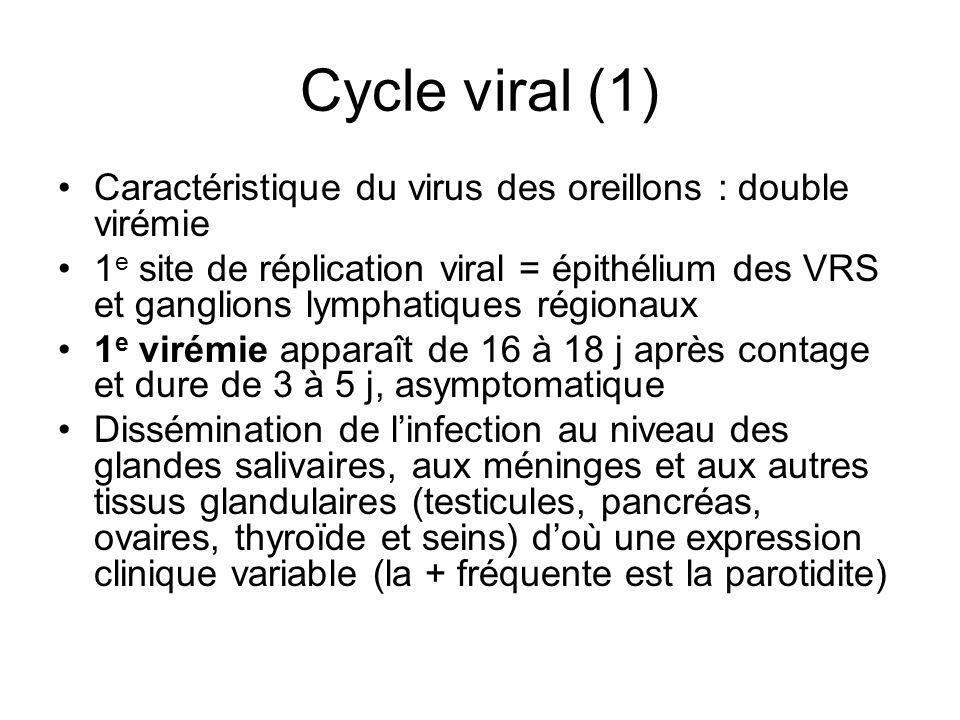 Cycle viral (1) Caractéristique du virus des oreillons : double virémie 1 e site de réplication viral = épithélium des VRS et ganglions lymphatiques r
