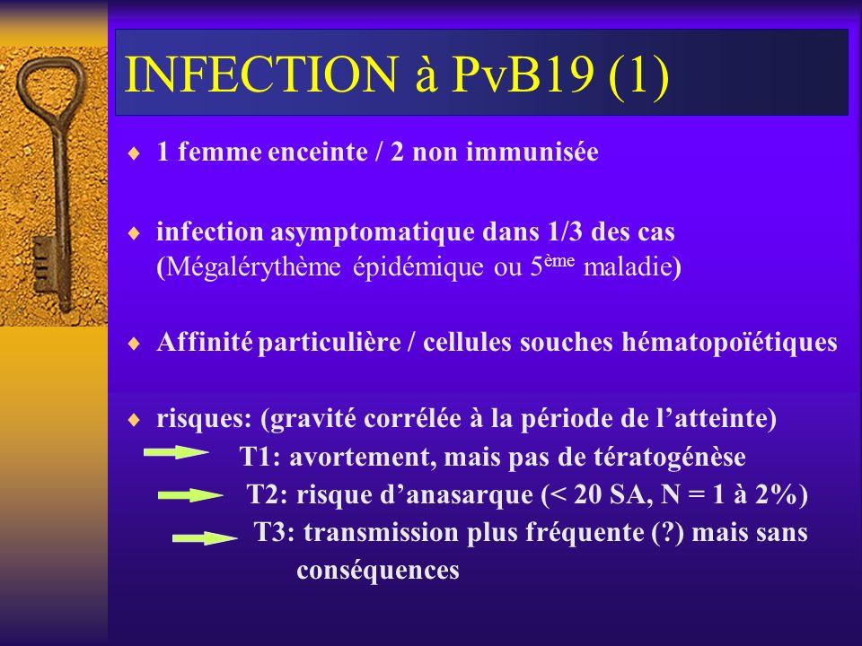 INFECTION à PvB19 (1) 1 femme enceinte / 2 non immunisée infection asymptomatique dans 1/3 des cas (Mégalérythème épidémique ou 5 ème maladie) Affinit