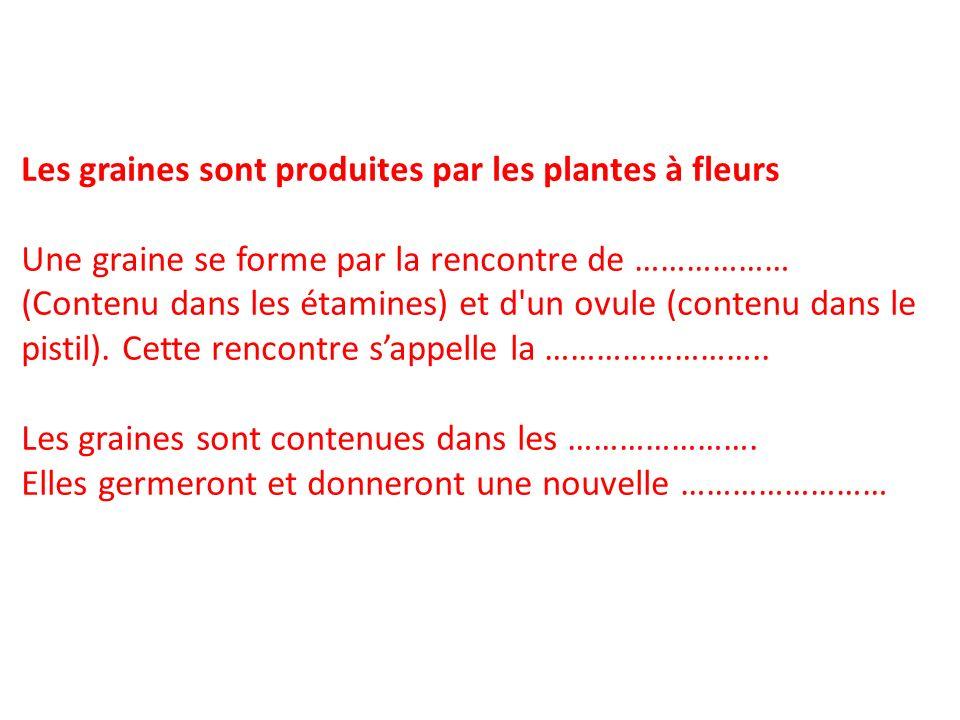 Les graines sont produites par les plantes à fleurs Une graine se forme par la rencontre de ……………… (Contenu dans les étamines) et d'un ovule (contenu