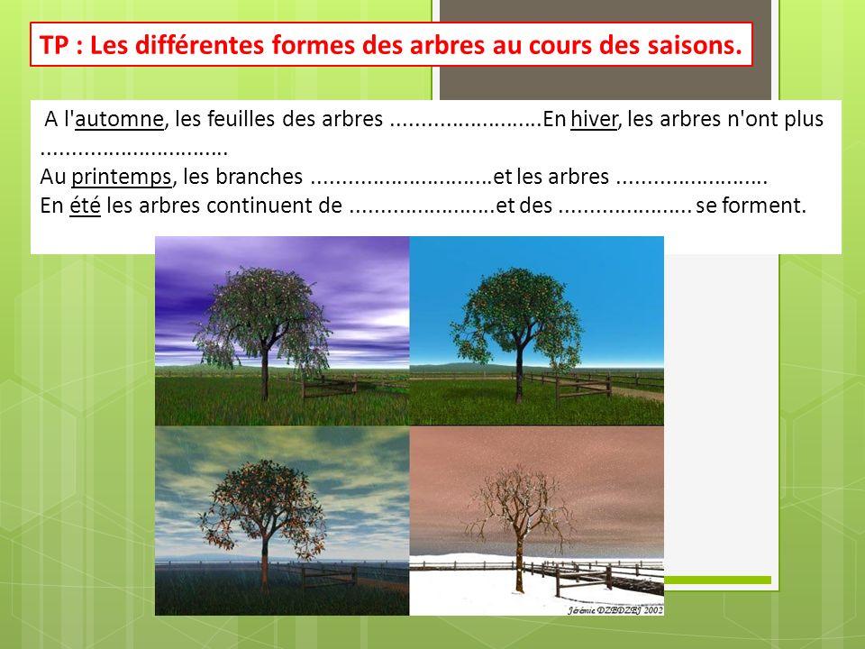 A l'automne, les feuilles des arbres.........................En hiver, les arbres n'ont plus............................... Au printemps, les branches