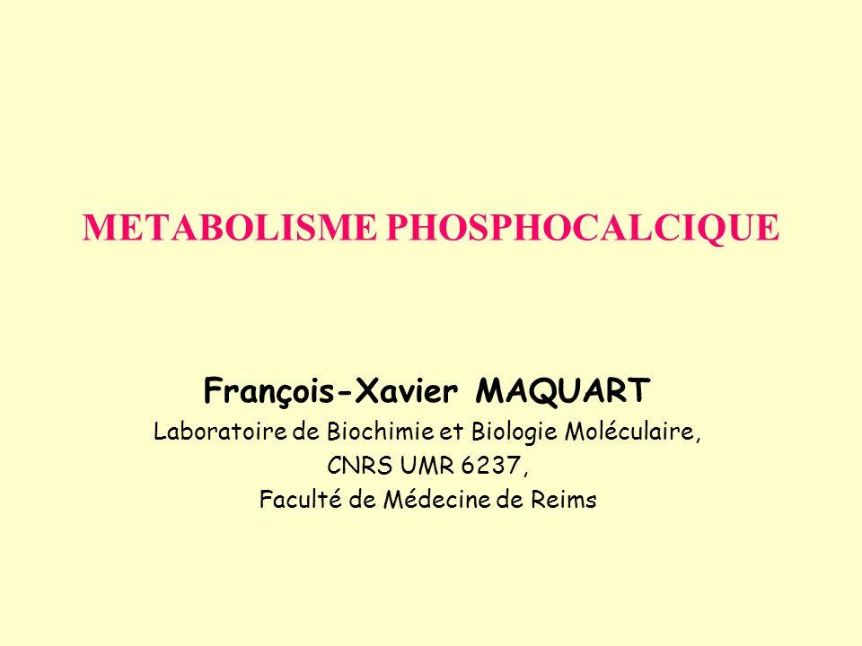METABOLISME PHOSPHOCALCIQUE François-Xavier MAQUART Laboratoire de Biochimie et Biologie Moléculaire, CNRS UMR 6237, Faculté de Médecine de Reims