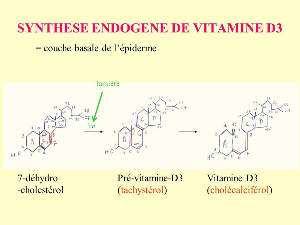 SYNTHESE ENDOGENE DE VITAMINE D3 = couche basale de lépiderme 7-déhydro -cholestérol Pré-vitamine-D3 (tachystérol) Vitamine D3 (cholécalciférol) h lum