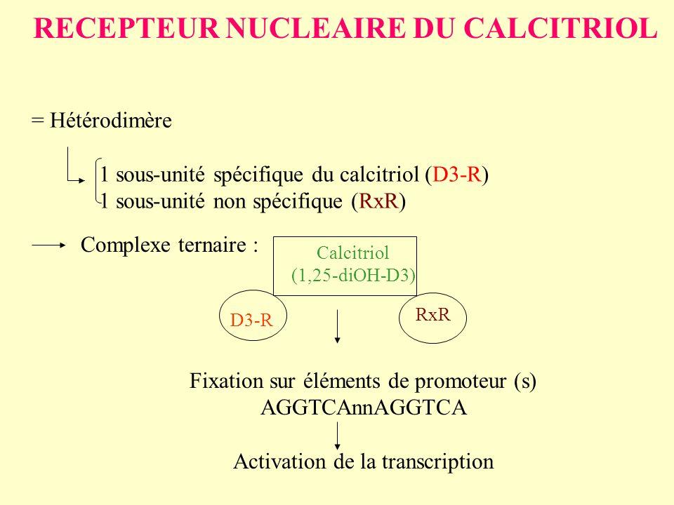 RECEPTEUR NUCLEAIRE DU CALCITRIOL = Hétérodimère 1 sous-unité spécifique du calcitriol (D3-R) 1 sous-unité non spécifique (RxR) Complexe ternaire : Ca