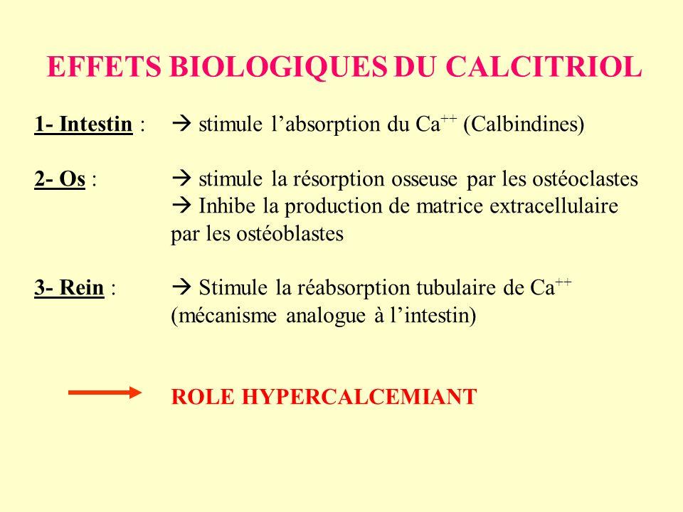 EFFETS BIOLOGIQUES DU CALCITRIOL 1- Intestin : stimule labsorption du Ca ++ (Calbindines) 2- Os : stimule la résorption osseuse par les ostéoclastes I