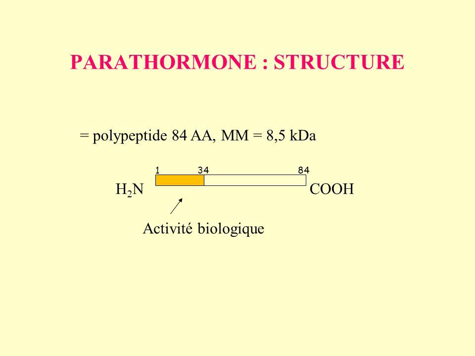 PARATHORMONE : STRUCTURE = polypeptide 84 AA, MM = 8,5 kDa 13484 H2NH2NCOOH Activité biologique