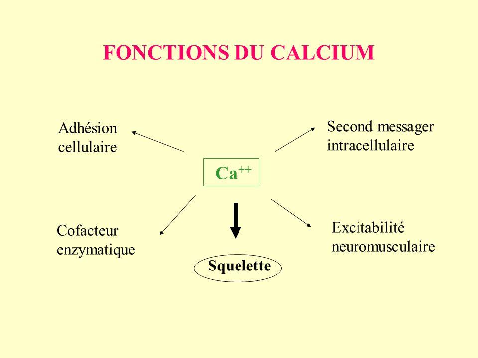 FONCTIONS DU CALCIUM Ca ++ Second messager intracellulaire Excitabilité neuromusculaire Squelette Cofacteur enzymatique Adhésion cellulaire