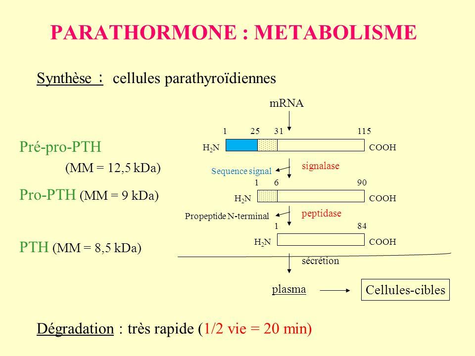 Pré-pro-PTH (MM = 12,5 kDa) Pro-PTH (MM = 9 kDa) PTH (MM = 8,5 kDa) Synthèse : cellules parathyroïdiennes H2NH2N 12531115 COOH H2NH2N 1690 COOH H2NH2N