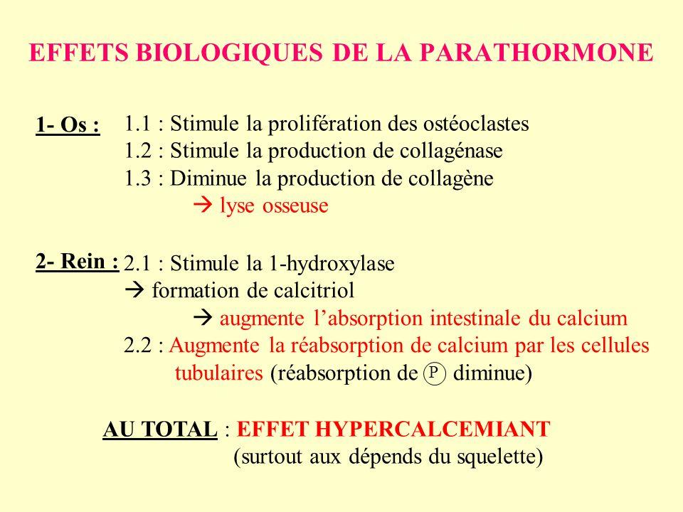 EFFETS BIOLOGIQUES DE LA PARATHORMONE 1- Os : 2- Rein : 1.1 : Stimule la prolifération des ostéoclastes 1.2 : Stimule la production de collagénase 1.3