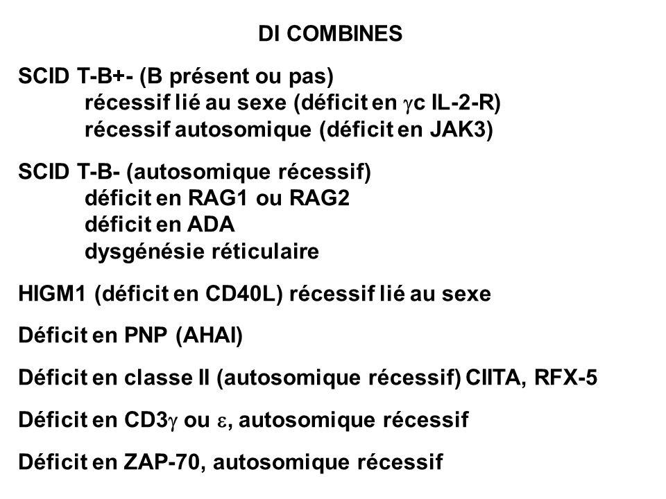 DI COMBINES SCID T-B+- (B présent ou pas) récessif lié au sexe (déficit en c IL-2-R) récessif autosomique (déficit en JAK3) SCID T-B- (autosomique réc