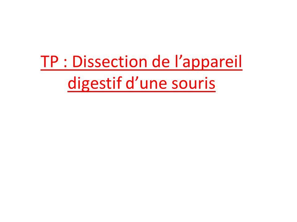 TP : Dissection de lappareil digestif dune souris
