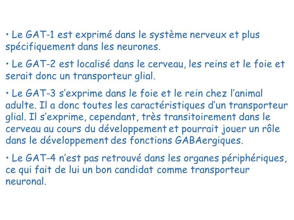 Le GAT-1 est exprimé dans le système nerveux et plus spécifiquement dans les neurones. Le GAT-2 est localisé dans le cerveau, les reins et le foie et