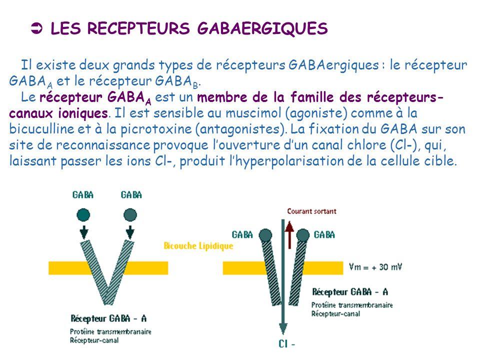 LES RECEPTEURS GABAERGIQUES Il existe deux grands types de récepteurs GABAergiques : le récepteur GABA A et le récepteur GABA B. Le récepteur GABA A e