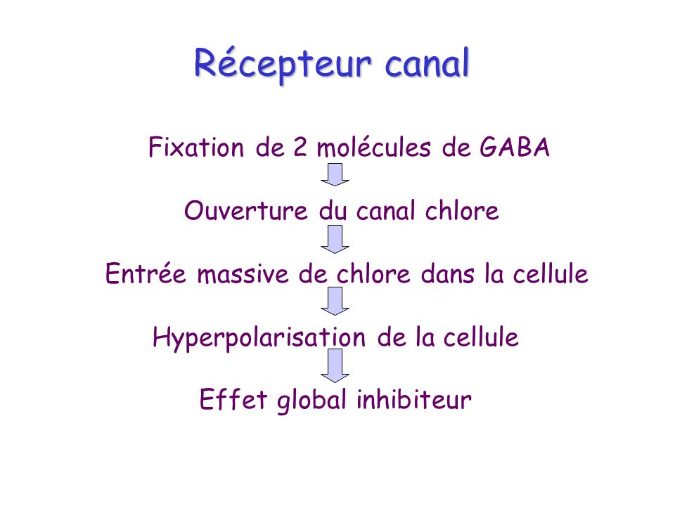 Récepteur canal Récepteur canal Fixation de 2 molécules de GABA Ouverture du canal chlore Entrée massive de chlore dans la cellule Hyperpolarisation d