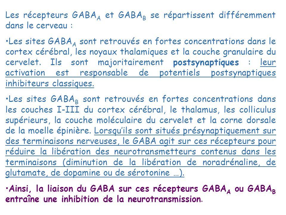 Les récepteurs GABA A et GABA B se répartissent différemment dans le cerveau : Les sites GABA A sont retrouvés en fortes concentrations dans le cortex