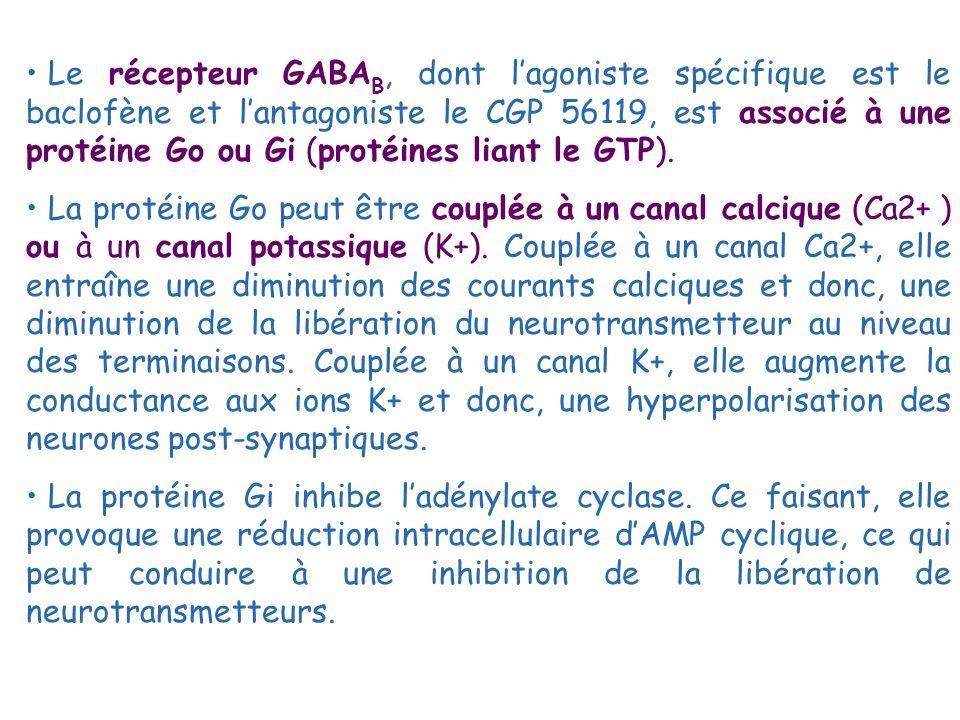 Le récepteur GABA B, dont lagoniste spécifique est le baclofène et lantagoniste le CGP 56119, est associé à une protéine Go ou Gi (protéines liant le