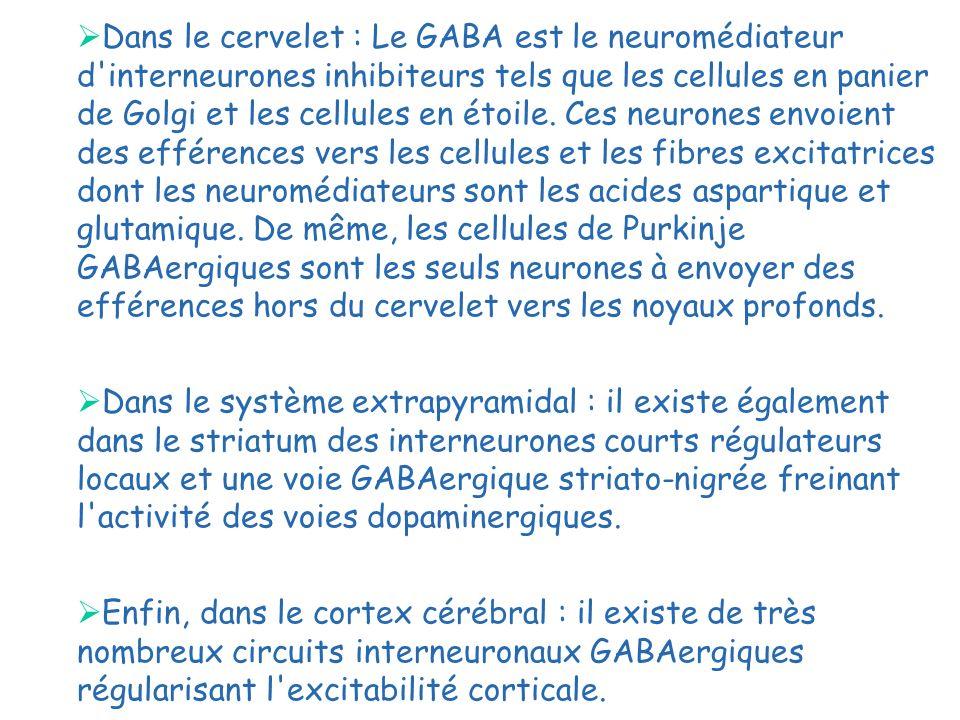 Dans le cervelet : Le GABA est le neuromédiateur d'interneurones inhibiteurs tels que les cellules en panier de Golgi et les cellules en étoile. Ces n