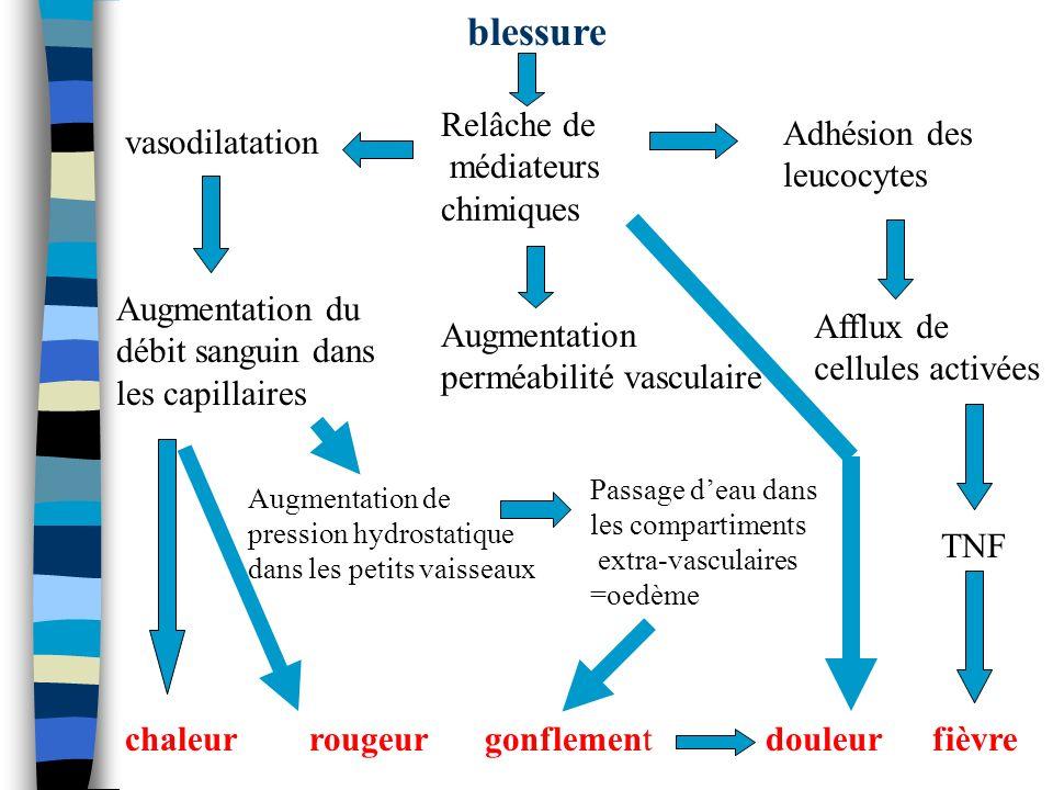 blessure vasodilatation Relâche de médiateurs chimiques Augmentation du débit sanguin dans les capillaires chaleur Augmentation perméabilité vasculair