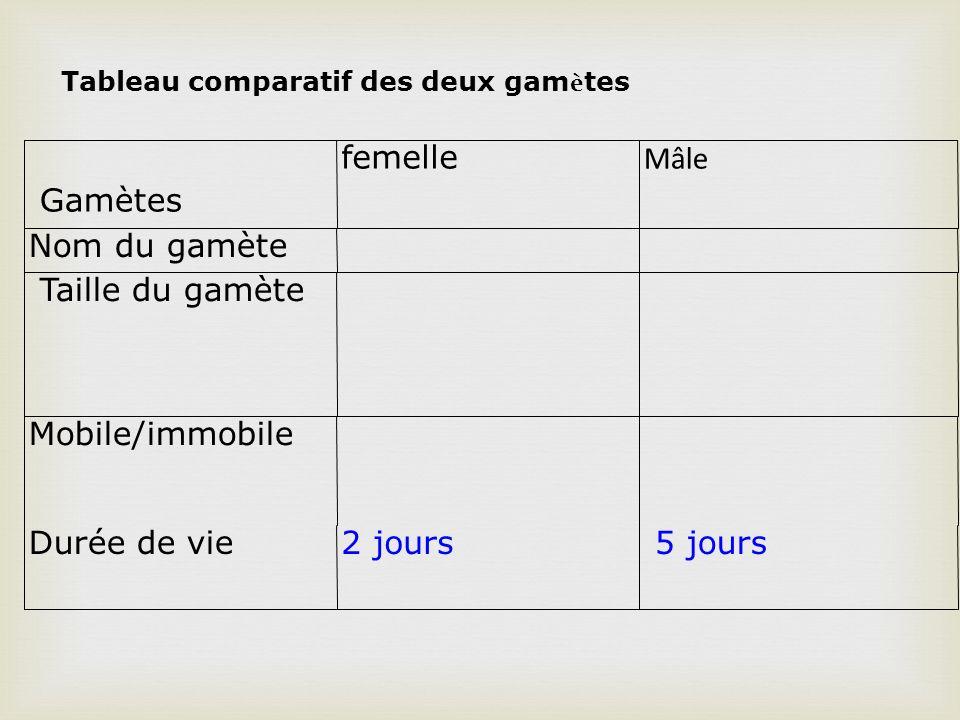 Gamètes femelle Mâle Nom du gamète Taille du gamète Mobile/immobile Durée de vie2 jours 5 jours Tableau comparatif des deux gam è tes