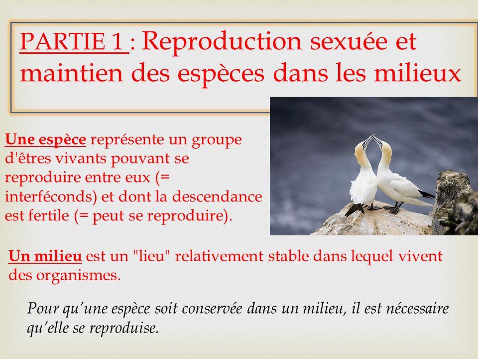 PARTIE 1 : Reproduction sexuée et maintien des espèces dans les milieux Une espèce représente un groupe d'êtres vivants pouvant se reproduire entre eu