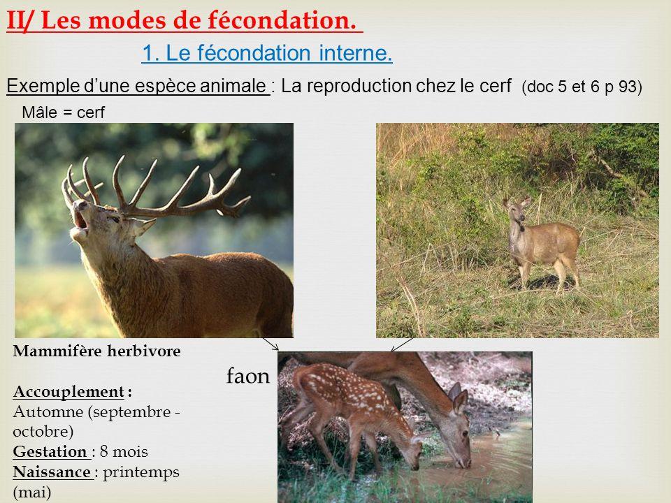 1. Le fécondation interne. Exemple dune espèce animale : La reproduction chez le cerf (doc 5 et 6 p 93) Mâle = cerf femelle = biche. faon Mammifère he