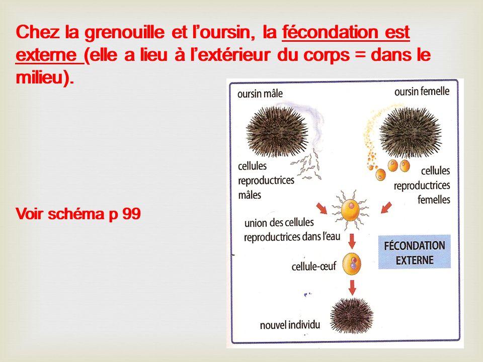 Chez la grenouille et loursin, la fécondation est externe (elle a lieu à lextérieur du corps = dans le milieu). Voir schéma p 99 Chez la grenouille et
