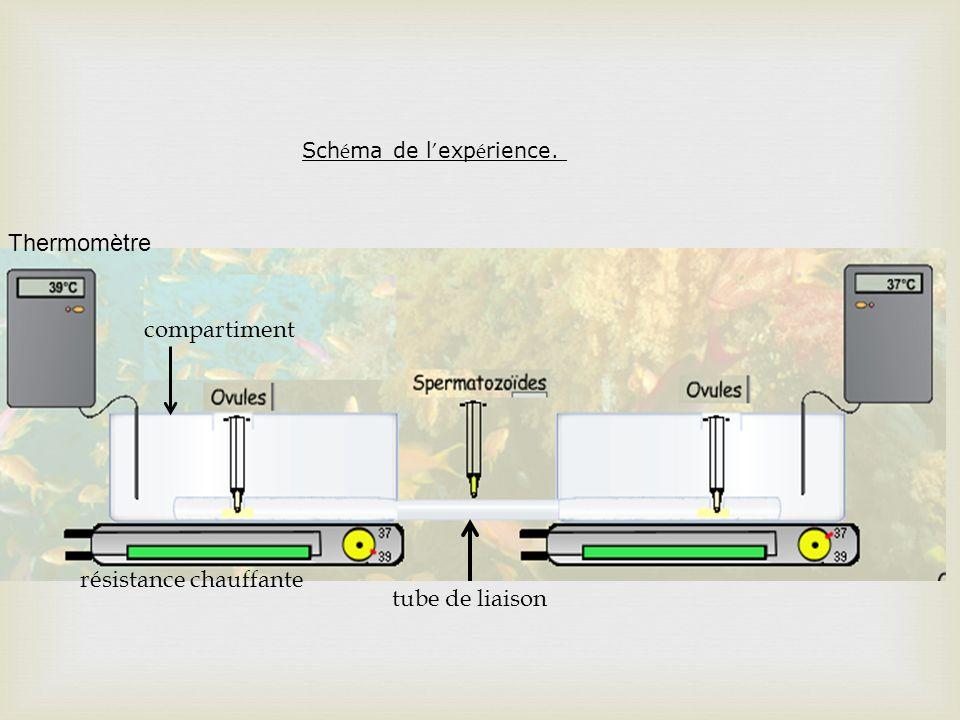 Sch é ma de l exp é rience. Thermomètre résistance chauffante compartiment tube de liaison