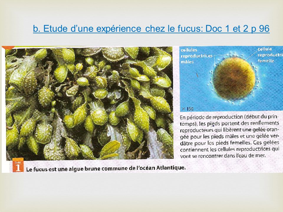 b. Etude dune expérience chez le fucus: Doc 1 et 2 p 96