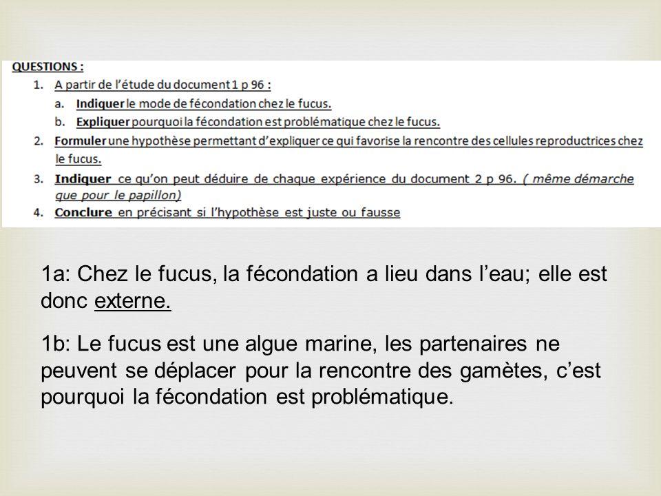 1a: Chez le fucus, la fécondation a lieu dans leau; elle est donc externe. 1b: Le fucus est une algue marine, les partenaires ne peuvent se déplacer p