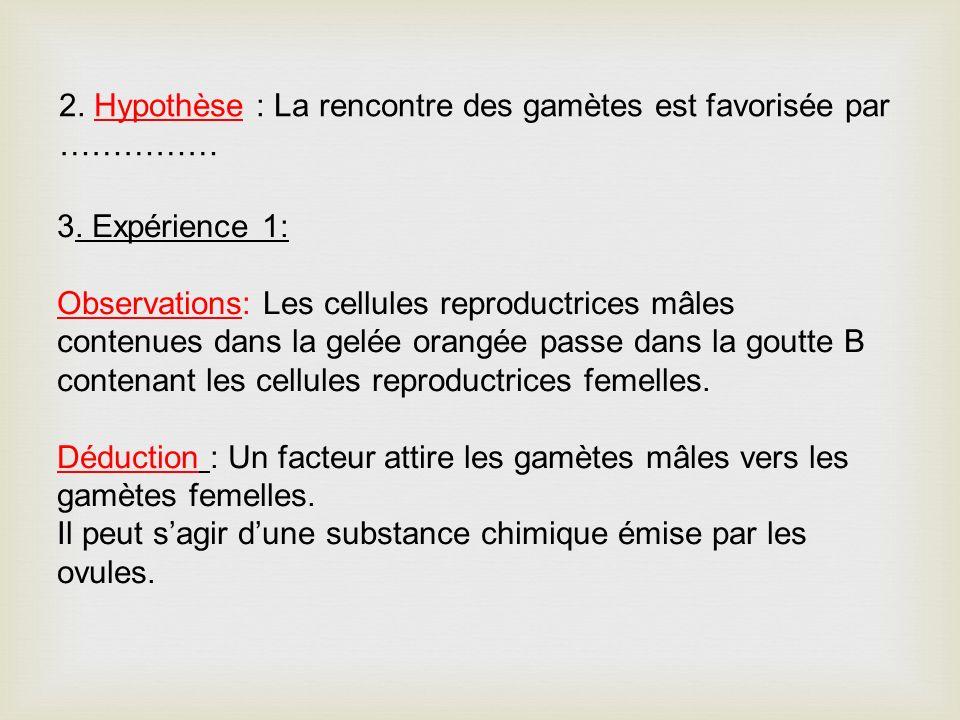 2. Hypothèse : La rencontre des gamètes est favorisée par …………… 3. Expérience 1: Observations: Les cellules reproductrices mâles contenues dans la gel