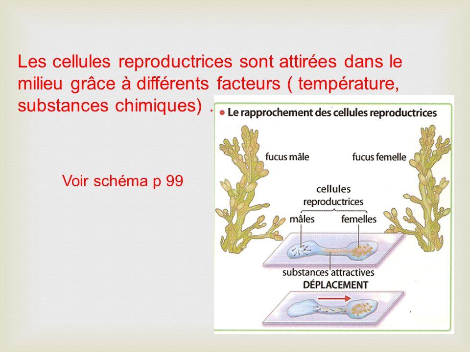 Les cellules reproductrices sont attirées dans le milieu grâce à différents facteurs ( température, substances chimiques). Voir schéma p 99