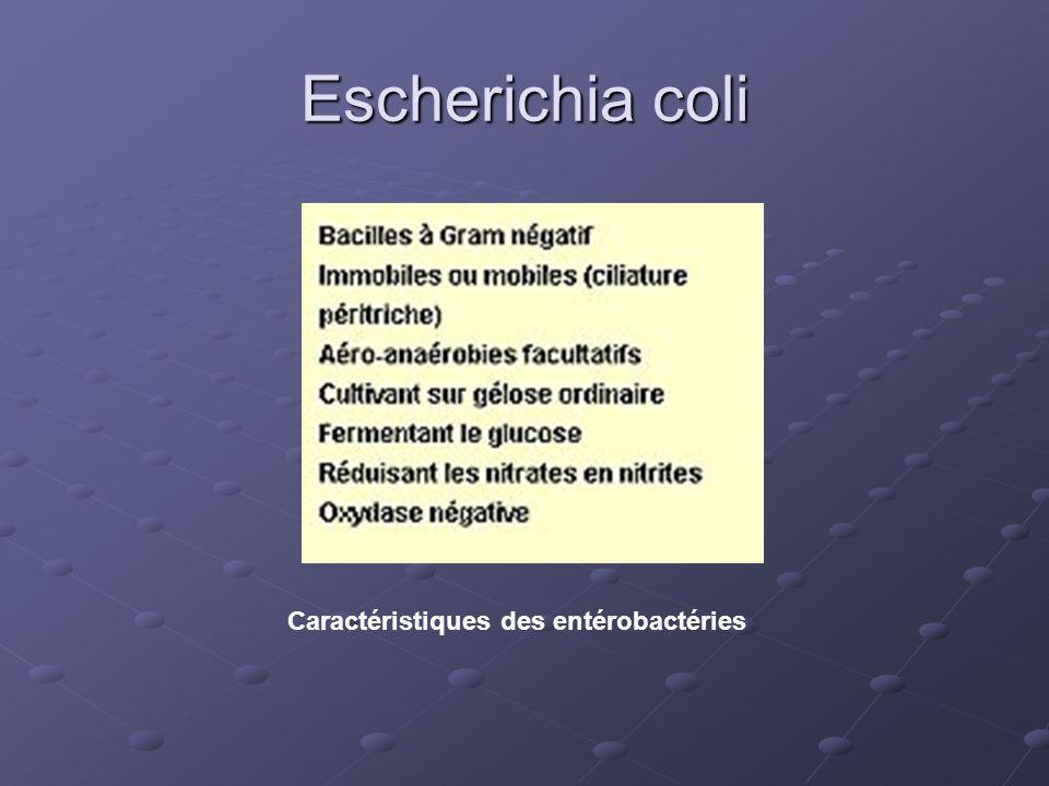 Escherichia coli Caractéristiques des entérobactéries
