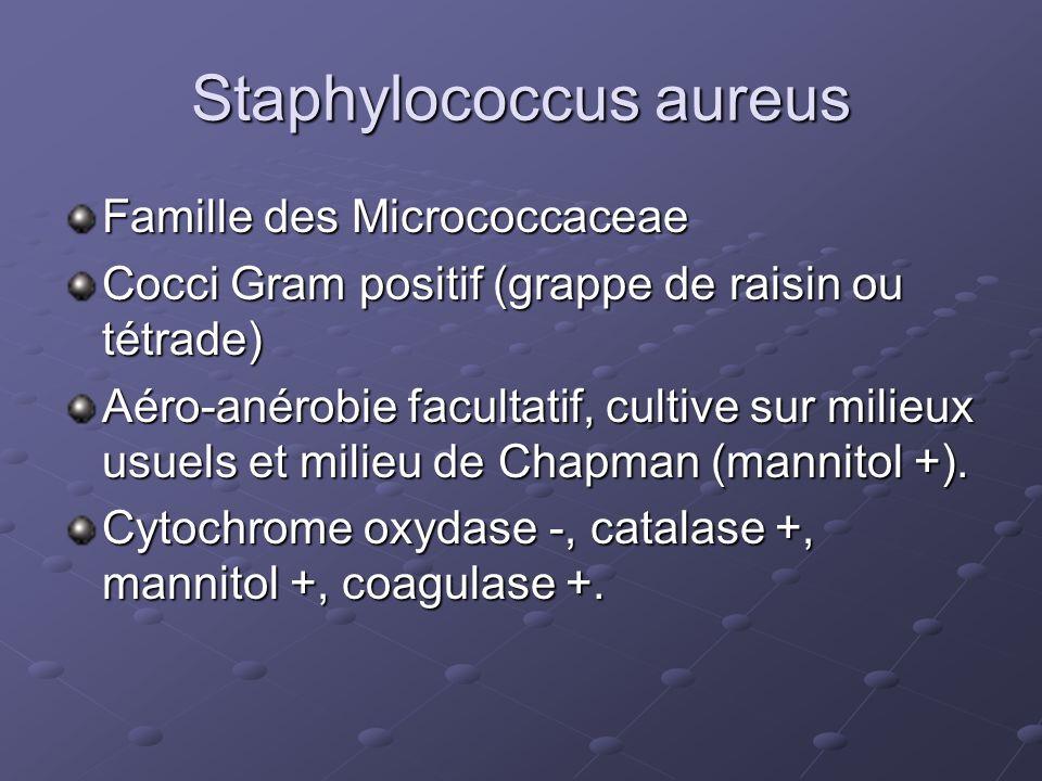 Staphylococcus aureus Famille des Micrococcaceae Cocci Gram positif (grappe de raisin ou tétrade) Aéro-anérobie facultatif, cultive sur milieux usuels