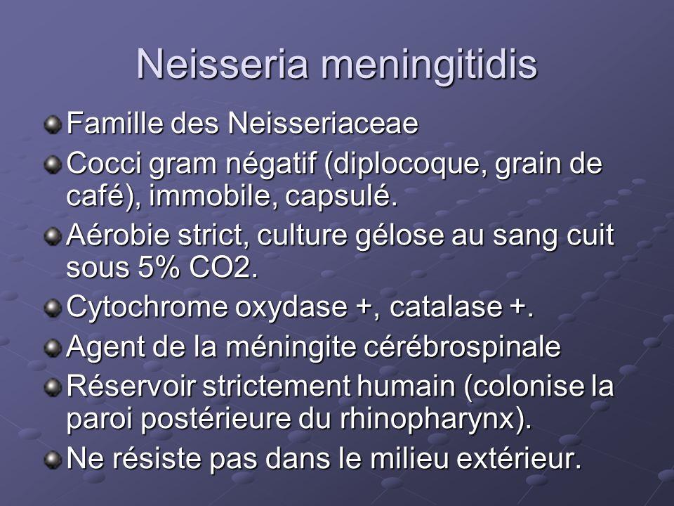 Neisseria meningitidis Famille des Neisseriaceae Cocci gram négatif (diplocoque, grain de café), immobile, capsulé. Aérobie strict, culture gélose au