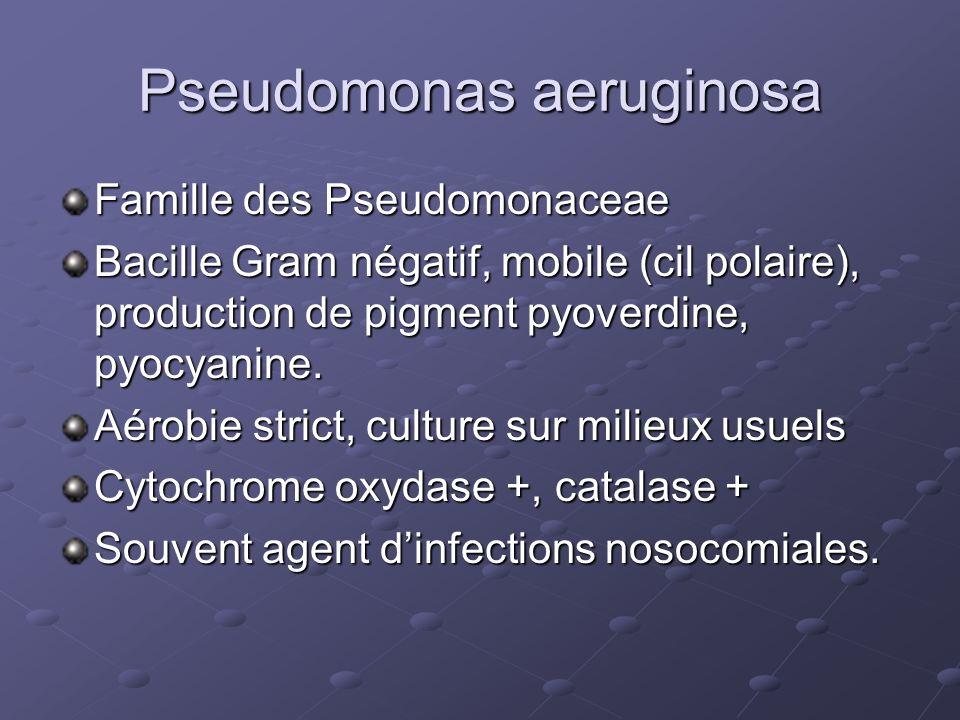 Pseudomonas aeruginosa Famille des Pseudomonaceae Bacille Gram négatif, mobile (cil polaire), production de pigment pyoverdine, pyocyanine. Aérobie st