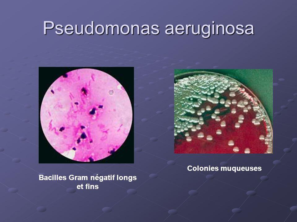 Pseudomonas aeruginosa Bacilles Gram négatif longs et fins Colonies muqueuses