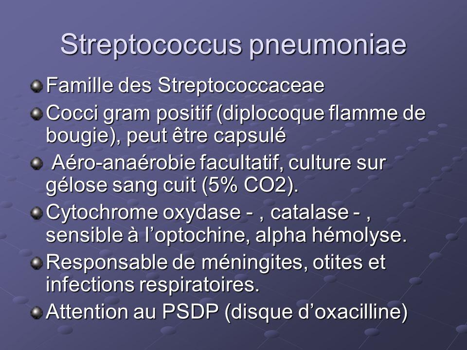 Streptococcus pneumoniae Famille des Streptococcaceae Cocci gram positif (diplocoque flamme de bougie), peut être capsulé Aéro-anaérobie facultatif, c