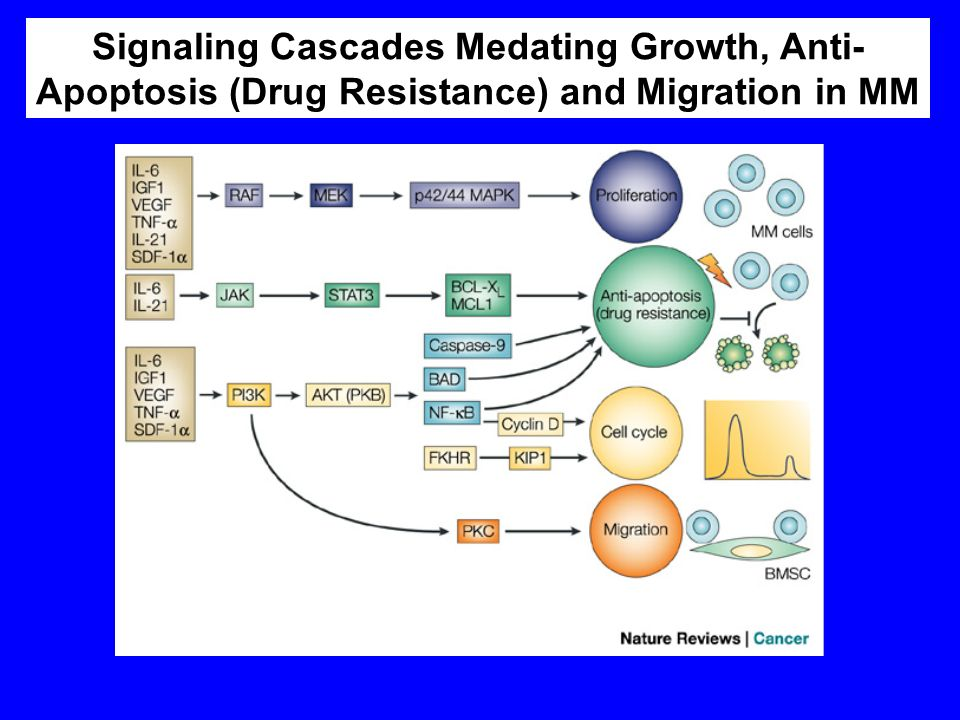Hideshima T & Anderson KC Nat Rev Cancer 2002 2:927-937 Signaling Cascades Medating Growth, Anti- Apoptosis (Drug Resistance) and Migration in MM