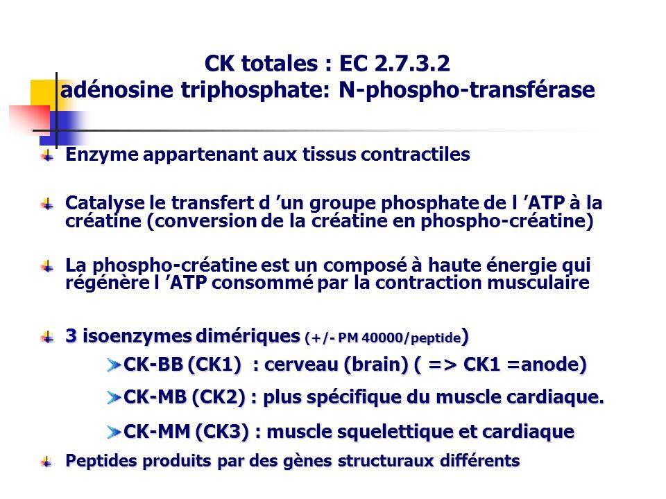 CK totales : EC 2.7.3.2 adénosine triphosphate: N-phospho-transférase Enzyme appartenant aux tissus contractiles Catalyse le transfert d un groupe pho