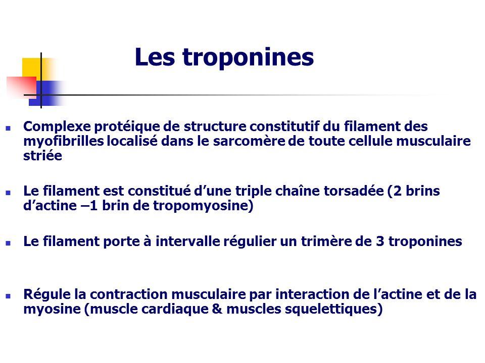 Les troponines Complexe protéique de structure constitutif du filament des myofibrilles localisé dans le sarcomère de toute cellule musculaire striée